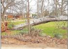 Crews are continuing to work at cleaning up after a storm that brought heavy winds and rain to Hughes Springs Jan. 10. Spring Park saw a large tree fall, disrupting power lines and leaving debris around the park.